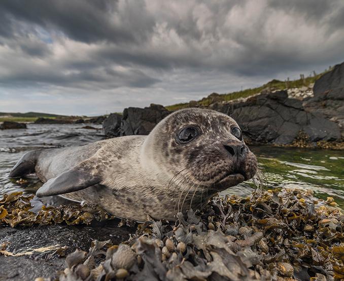 Rathlin Island seal