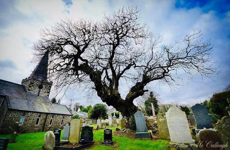 Armada Tree